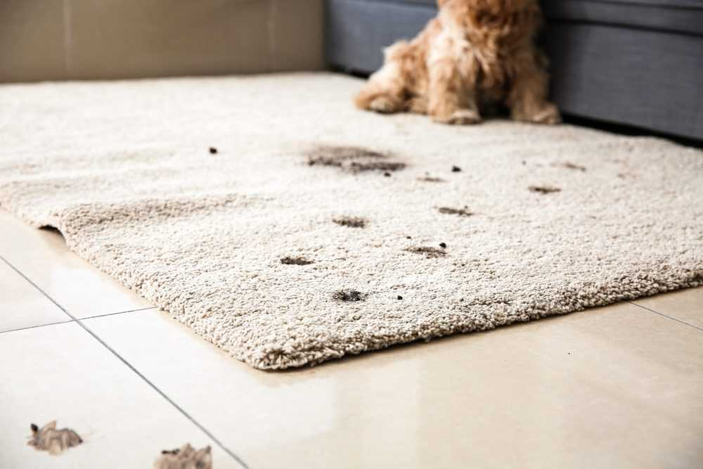 4 Types Of Carpet Stains That Are Difficult To Remove On Your Own